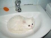 ищу котёнка