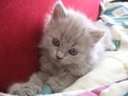 Приму в дар котенка белую,  девочку можно и новорожденную.